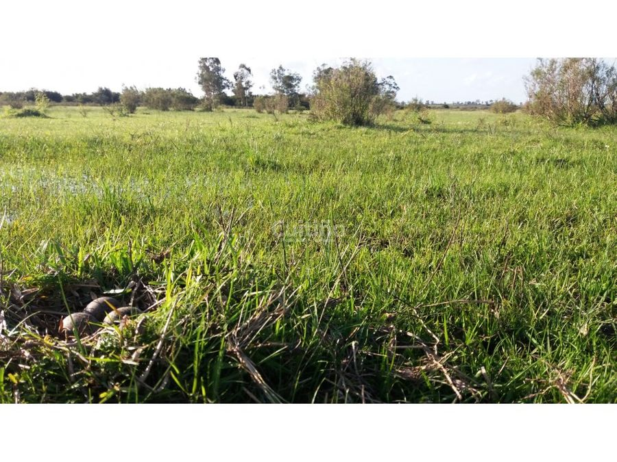 campo 24 y 12 has agricola ganadero en tala