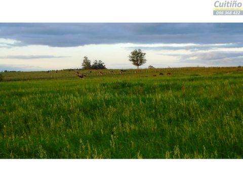 campo 7 hectareas con aguada arroyo y ute
