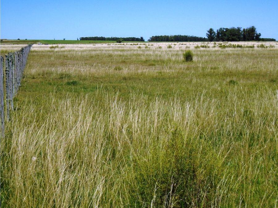 campo 15 has con aguada permanente tala canelones
