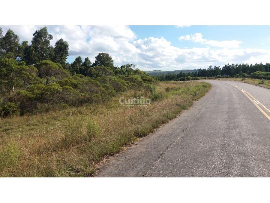 campo 50 hectareas sobre ruta rocha