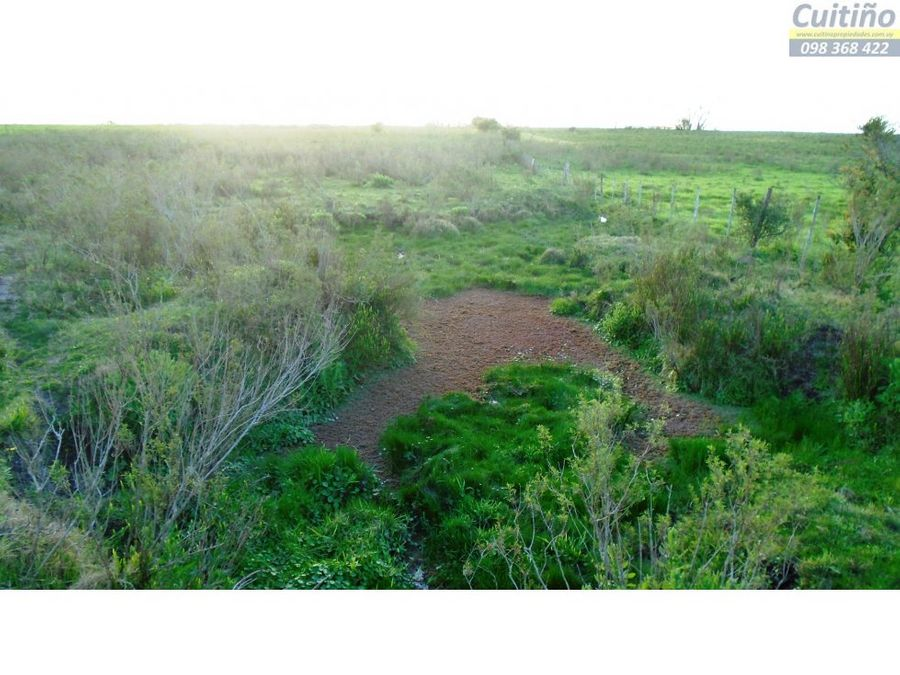 campo 12 has agricola en tala
