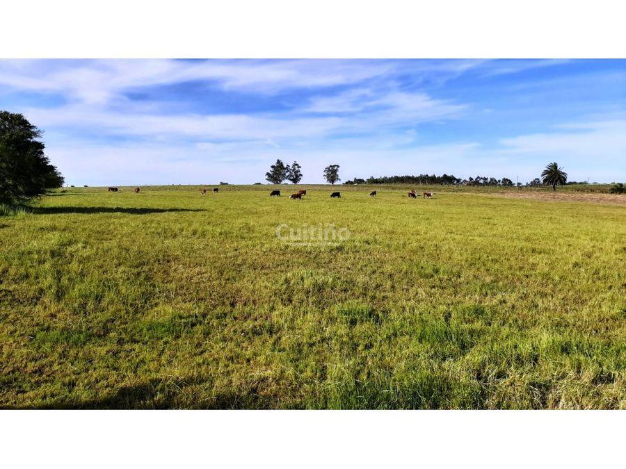 campo terreno 3 hectareas ideal empresas