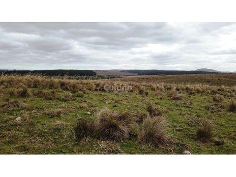 campo en venta 42 hectareas en treinta y tres