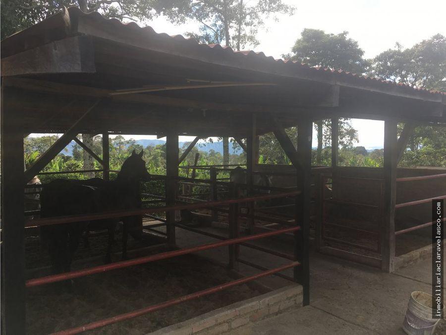 se vende finca entre montenegro y quimbaya