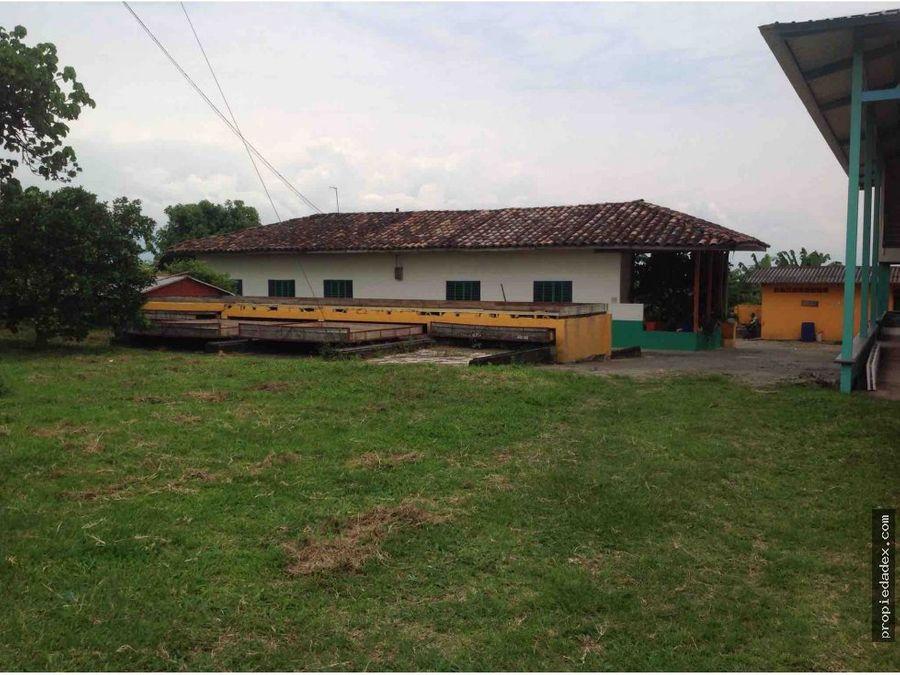 finca de 47 cuadras en aguacate quimbaya