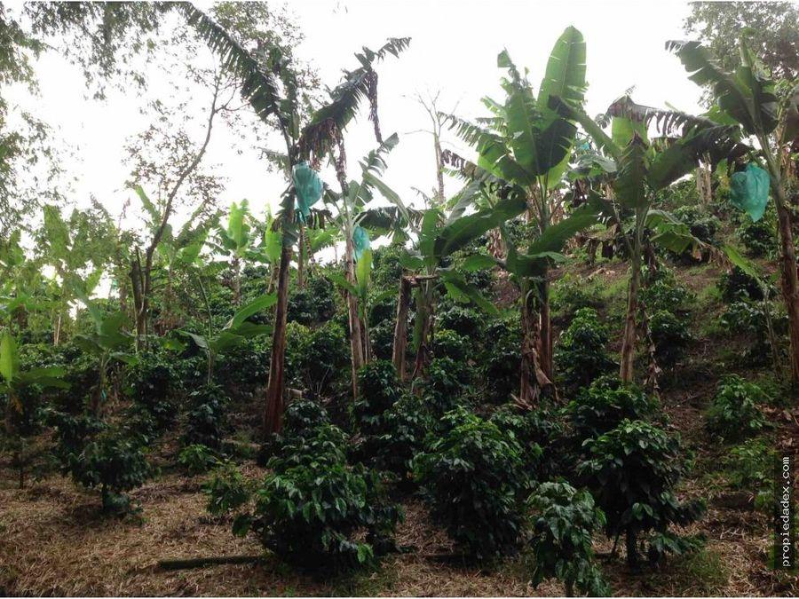 finca de 28 cuadras cafe y platano quimbaya