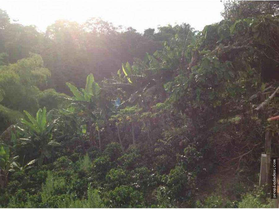 finca de 3 hectareas cerca a circasia