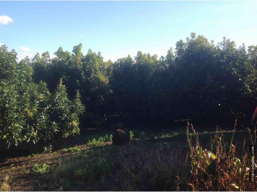 finca en aguacate 24 cuadras en montenegro