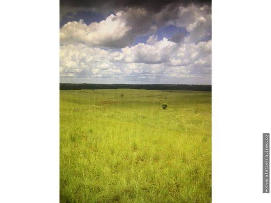 finca ideal para proyecto forestal