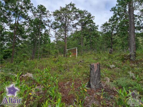 se vende lote de 229386 vrs en bosque de zambrano