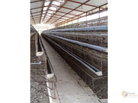 se vende galpon avicola via gye manabi