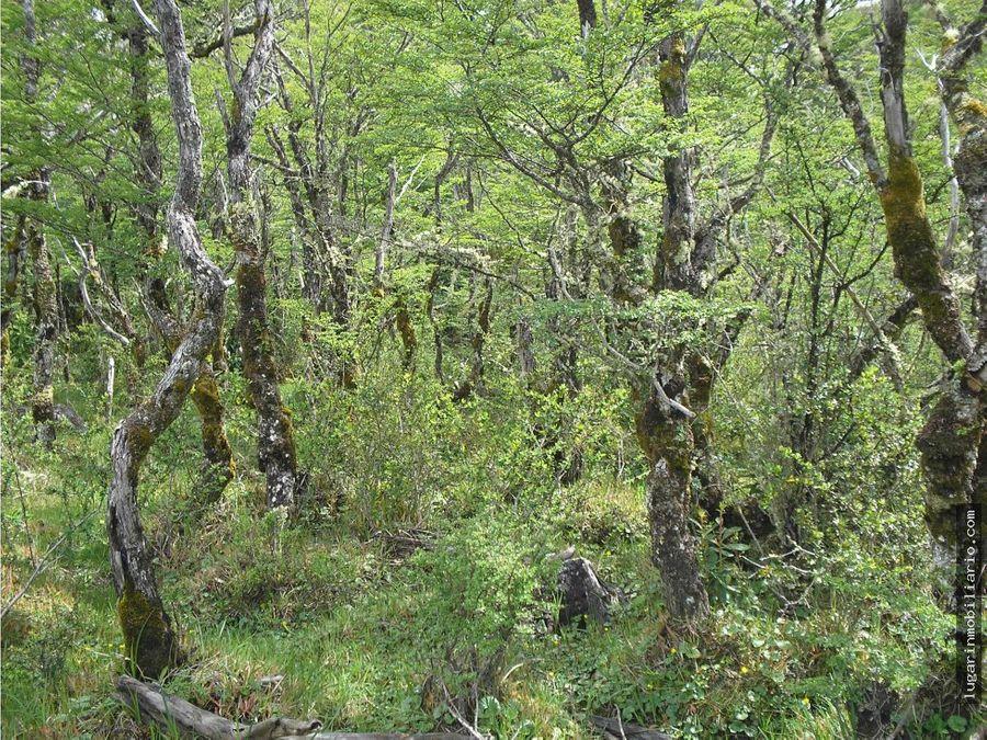 venta 127 hectareas en la patagoniapto tranquilo