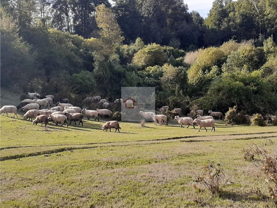 parcela en venta sector chancoyan alto en valdivia