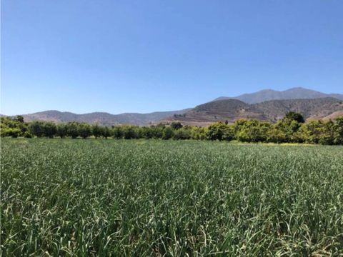 terreno san antonio naltagua el paico