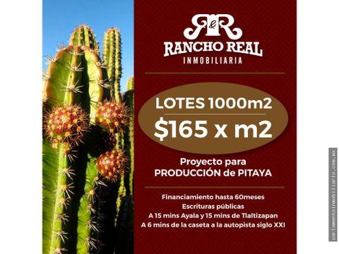lotes de inversion en venta 1000 m2 proyecto para produccion de pitaya