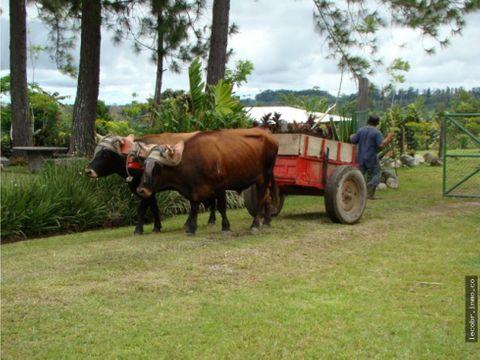 vendo finca para caballos en san vito coto brus