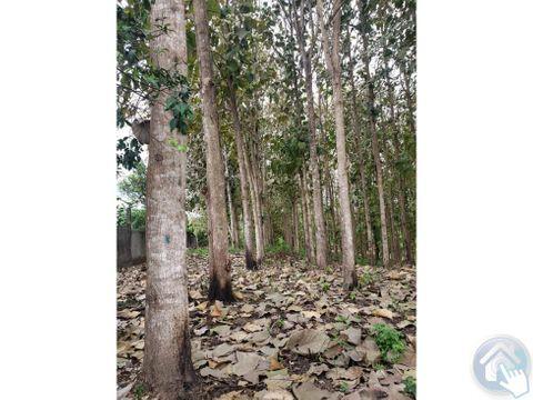 venta de 42 ht de terreno chigue esmeraldas