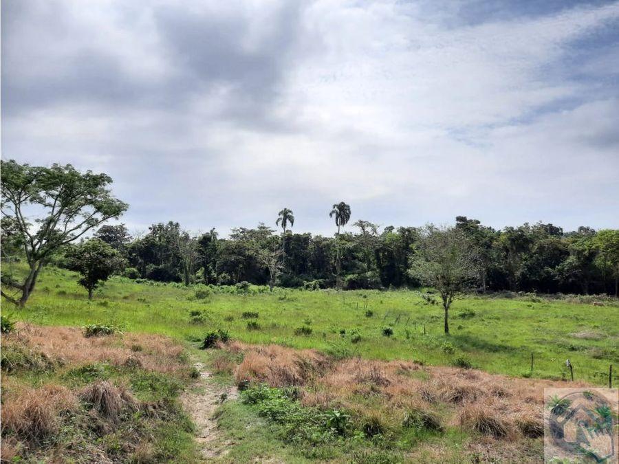 venta de 31 ht montalvo sector africa esmeraldas ecuador