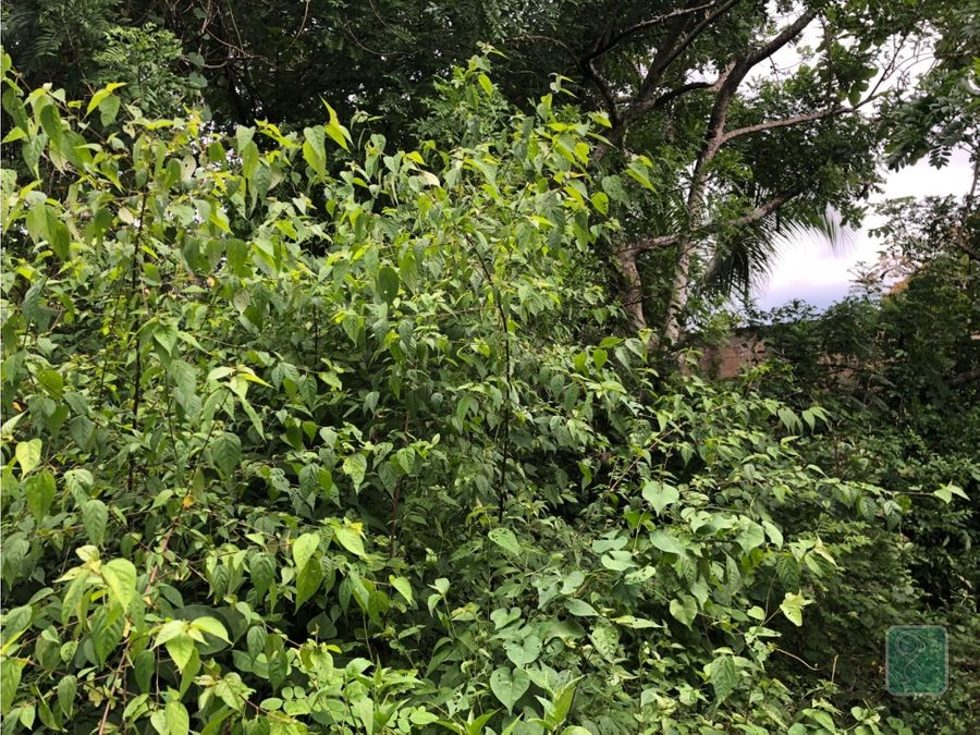 gran terreno en venta en valladolid yucatan