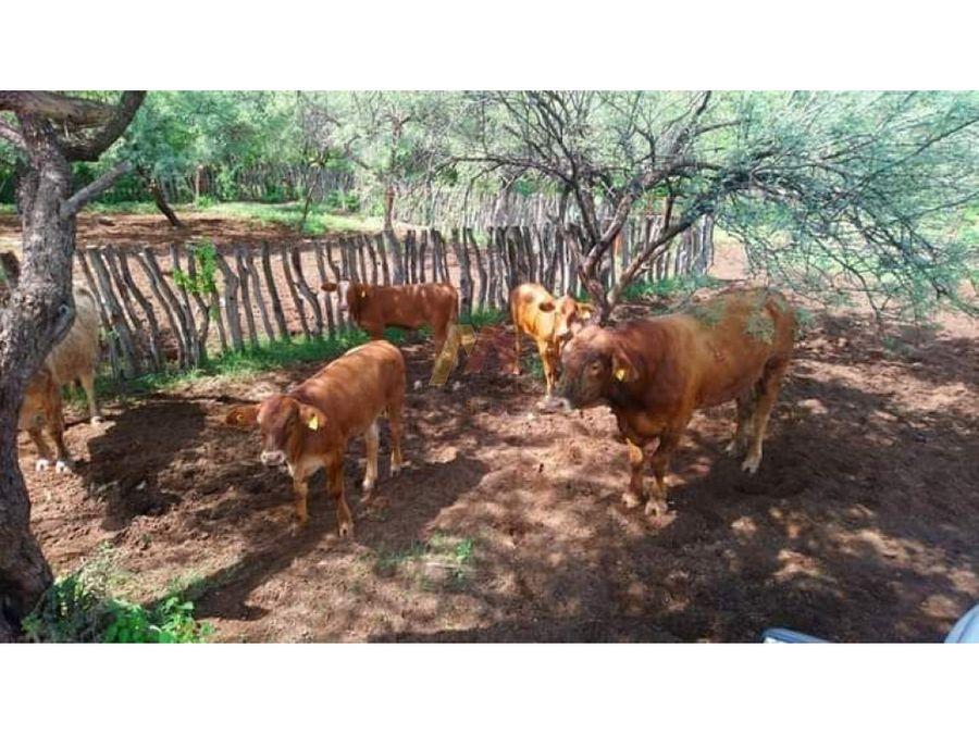 rancho en venta matapesan pedro de la cueva
