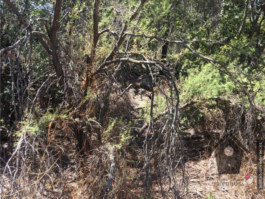 oasis de la campana hijuelas 5876m2