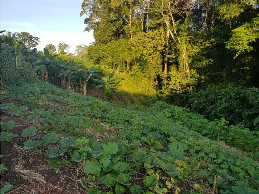 venta de quintas en san humberto los chiles