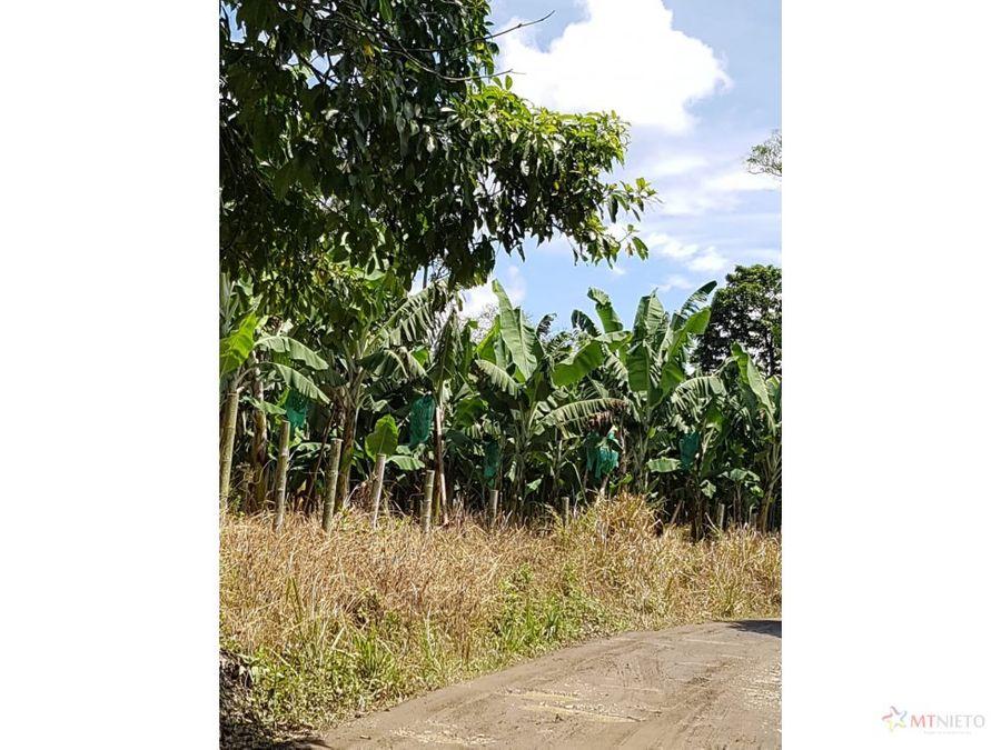 finca 80 cuadras 51 has banano en quimbaya