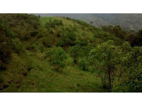 finca salento 339 hectareas via camino nacional