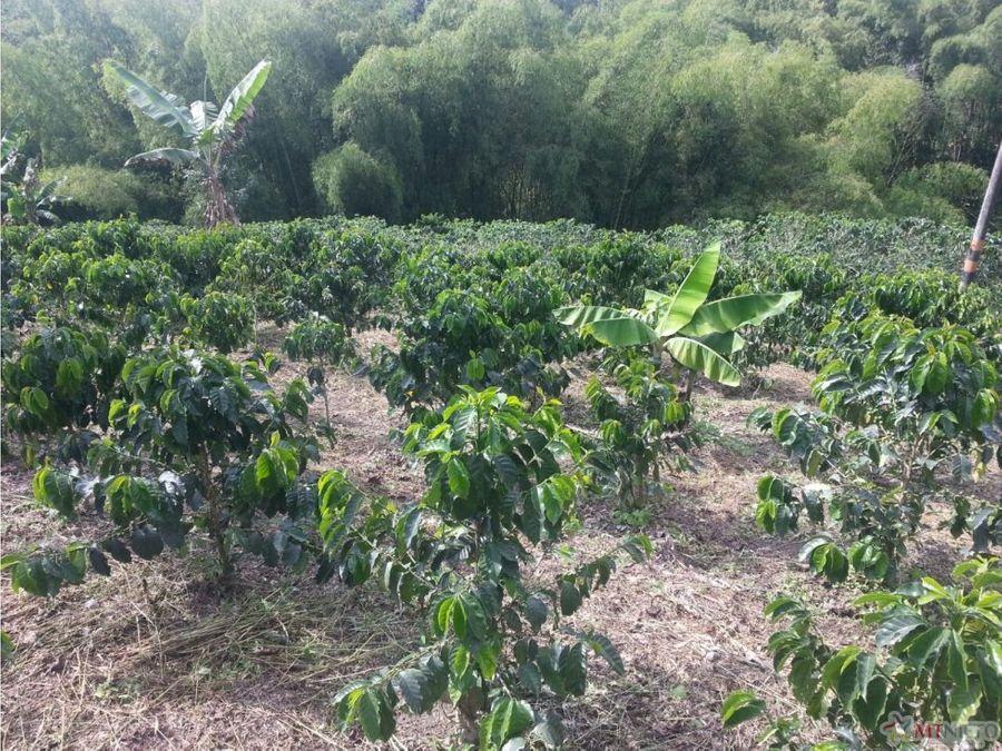 finca hotel cultivo cafe 64 cuadras montenegro