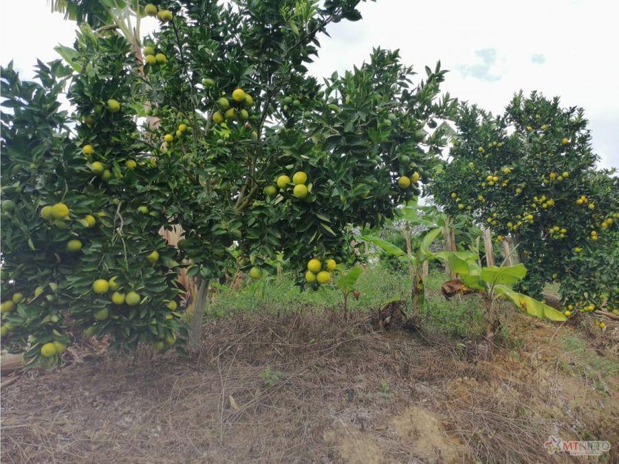 finca turistica 15 cuadras en naranja rio verde