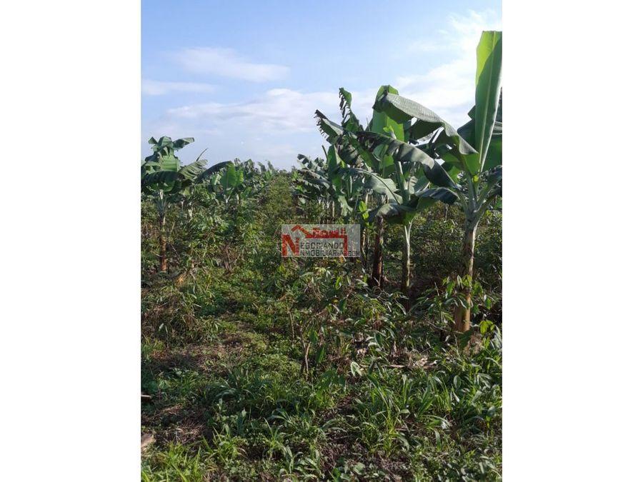venta finca en produccion via pueblo tapao