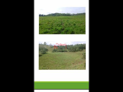 venta cultivos stevia citricos caldas 319 cuadras