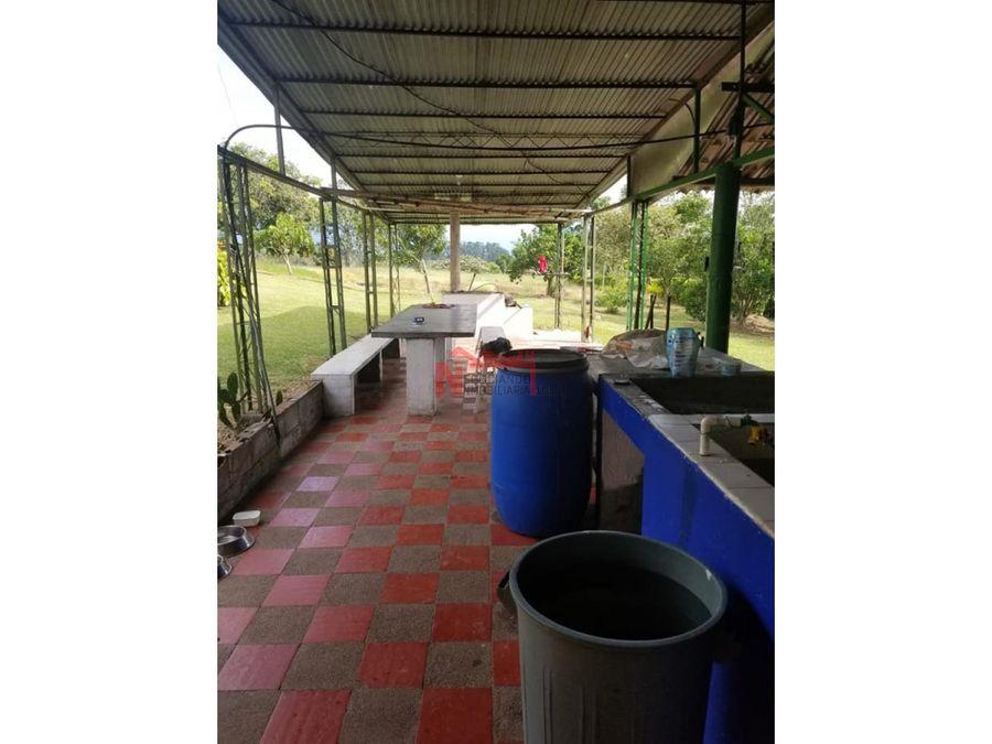 venta finca en quimbaya 2 hectareas