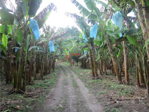 venta finca cultivo platano pueblo tapao