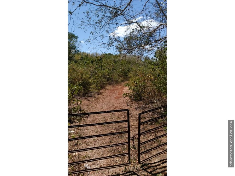159 hectareas supercarretera uayma yucatan