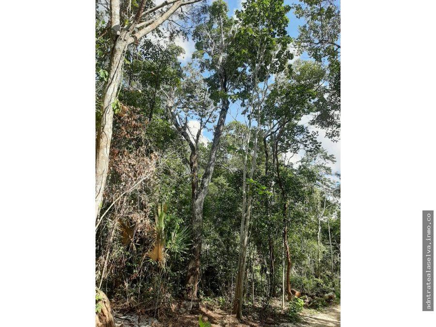 venta 1 h selva alta en camino pavimentado