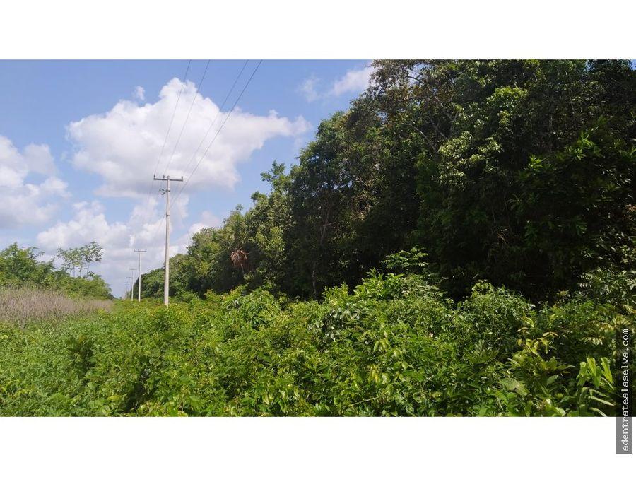venta 10 h pie de carretera ruta de los cenotes
