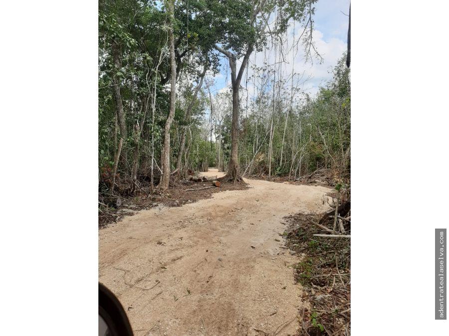 remate 15 hectareas selva alta leona vicario