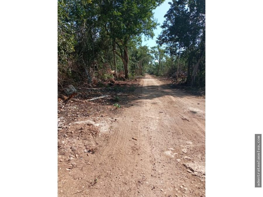 terreno 2 hectareas ruta de los cenotes