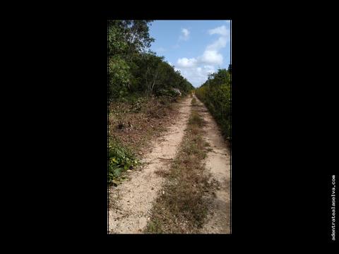 1 hectarea km 28 ruta de los cenotes