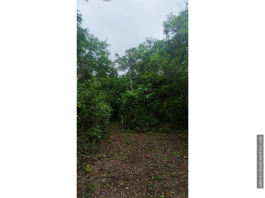 1 h ruta de los cenotes a 300 metros de la carretera