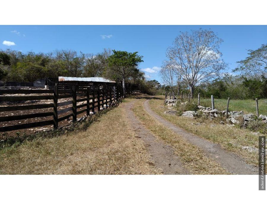 rancho ganadero en temozon 141 h