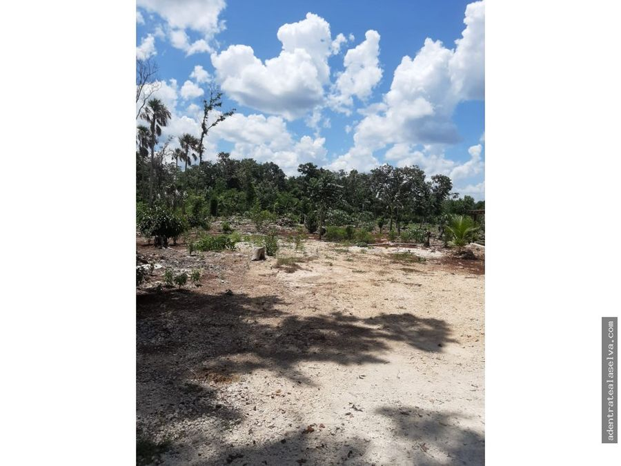 venta terreno 60 hectareas con certificado agrario leona vicario