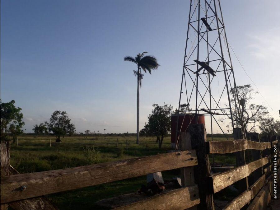 rancho ganadero rio lagartos 204 hectareas mecanizable