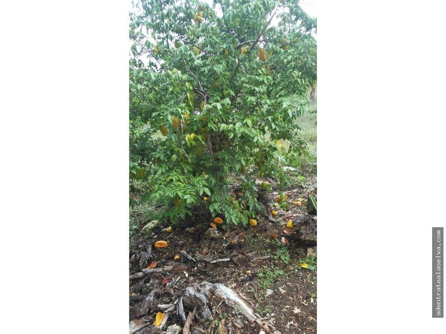 venta rancho 15 h ruta de los cenotes