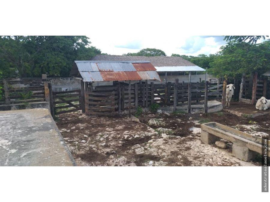 venta 403 h escrituradas con 3 cenotes panaba