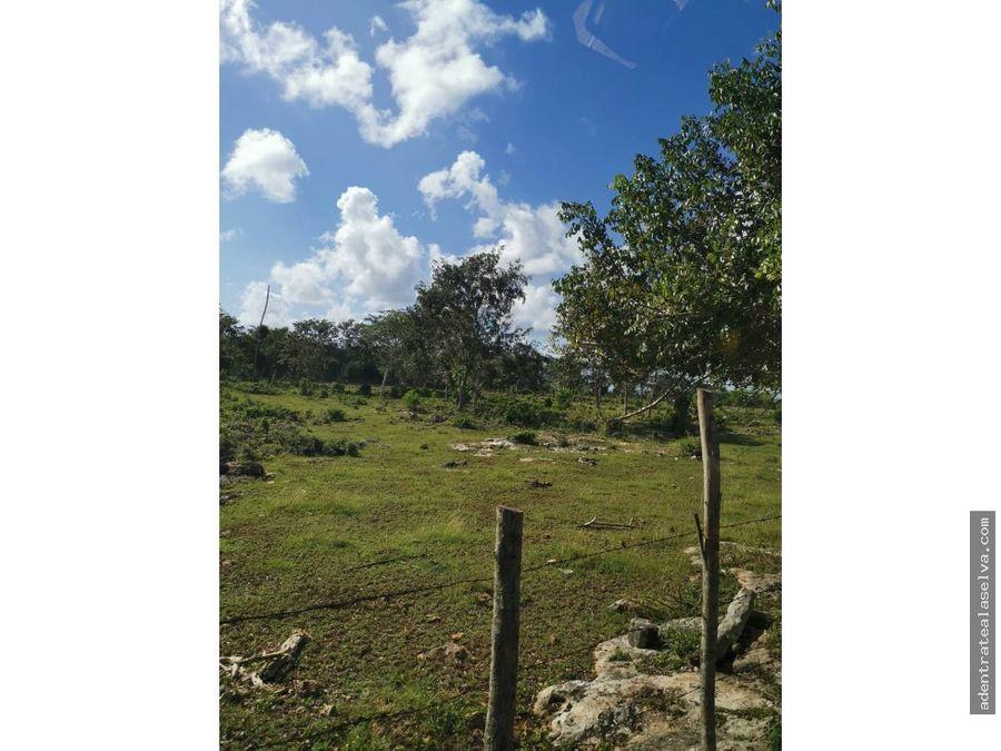 venta 300 hectareas con 8 cenotes tizimin yucatan