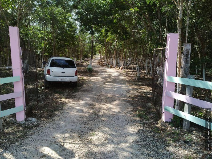 lotes km 34 ruta de los cenotes
