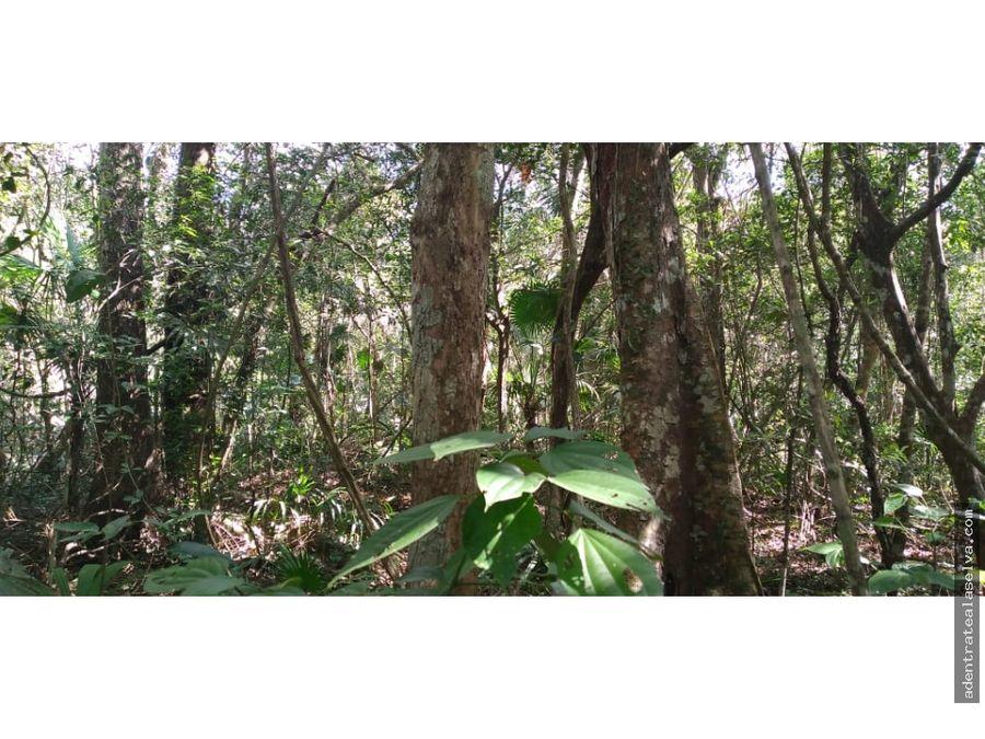 20 hectareas con cenote km 24 ruta de los cenotes puerto morelos