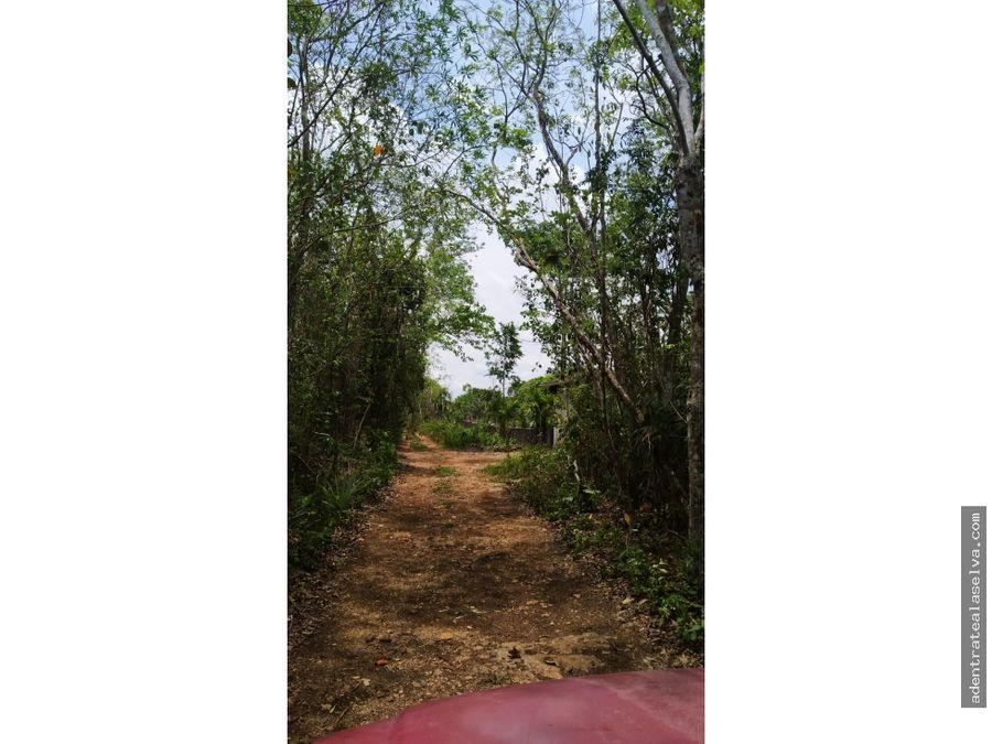 lote de 1 hectarea cerca hermoso cenote leona vicario